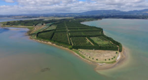Kiwicado Orchard from the Air